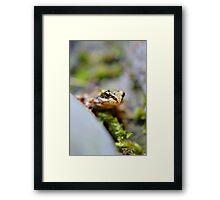 The little watcher. Framed Print