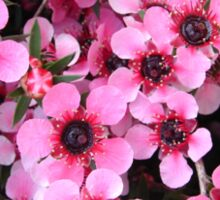 New Zealand Tea Tree Blossoms Sticker