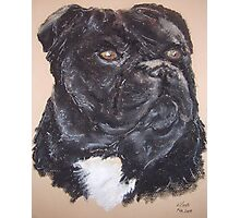 Staffordshire Bull Terrier dog Photographic Print