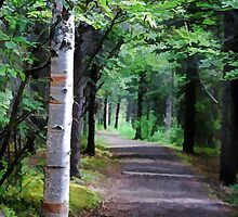 Into the Woods by Eileen McVey