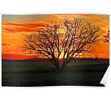 Pampas Sunset Poster