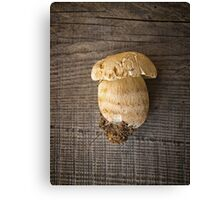 Mushroom Boletus over Wooden Background Canvas Print