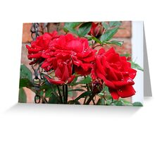 Miniature Red Roses Greeting Card
