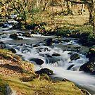 Walking near Dolgellau, West Wales by AnnDixon