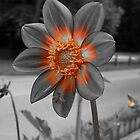 Dahlia in selective coloring by jammingene