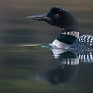 Loon up close by Rob Lavoie