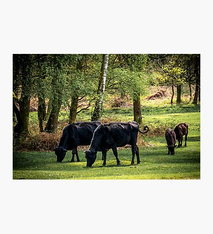 Family lunch time Photographic Print