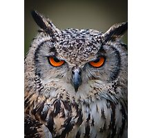 Eyes of an Indian Eagle Owl Photographic Print