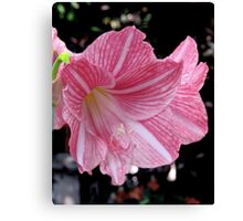 Red Stripped Lily Canvas Print