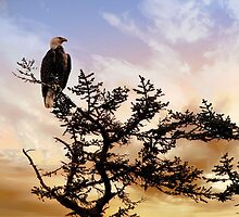 Eagle in Alaska by Nancy Richard