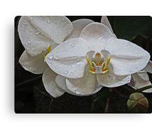 White Dream Orchid Canvas Print