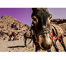 You want donkey ride mister?  Photographic Print