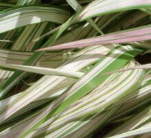 Ribbon Grass Sticker