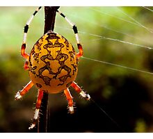 Yellow Orb Spider Photographic Print