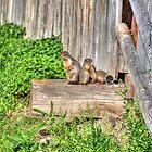 Marmot Love by Skye Ryan-Evans