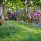 Woodland Wonder by vivsworld