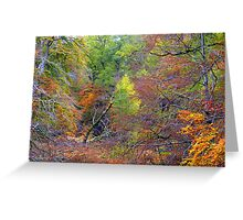 Cawdor Wood in Autunmn Greeting Card