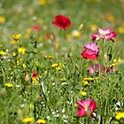 Wildflower Meadow by RedGrouse