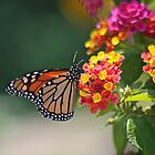 A Lantana Lover by autumnwind