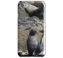 Seal Family iPhone Case/Skin