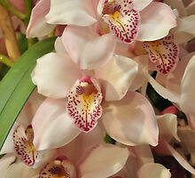 White and pink orchid by gabriellaksz