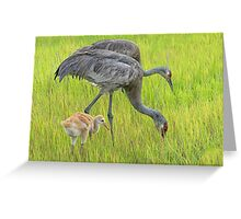 Sandhill crane parents with chick Greeting Card
