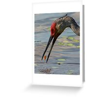 Feeding Sandhill Crane Greeting Card