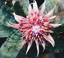 Flowers by Santamariaa