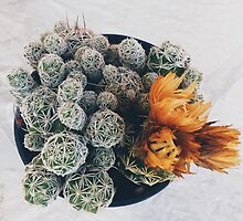 Crazy looking Cacti by Santamariaa