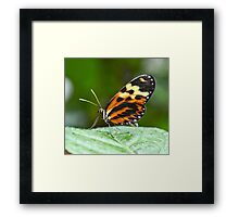 Orange and Yellow Butterfly Framed Print