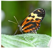 Orange and Yellow Butterfly Poster