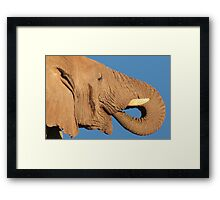 Elephant - Thirst and Pleasure - African Wildlife Background Framed Print