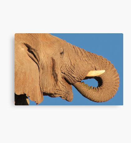 Elephant - Thirst and Pleasure - African Wildlife Background Canvas Print