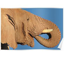 Elephant - Thirst and Pleasure - African Wildlife Background Poster