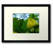 Yellow Flower Bud Framed Print