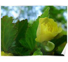 Yellow Flower Bud Poster