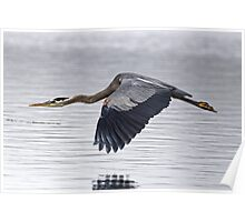 Great Blue Heron Over Still Waters Poster