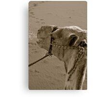 Wadi Rum ride Canvas Print