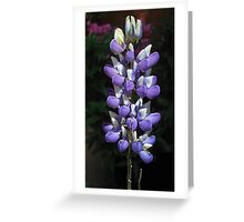 Growing Up - A Young Lupin Greeting Card