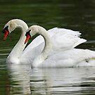 A Majestic Couple by jozi1