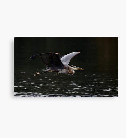 Graceful Great Blue Heron Canvas Print