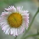 Flower by letterw