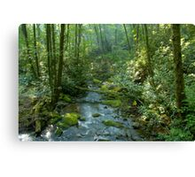 Cool forest stream Canvas Print