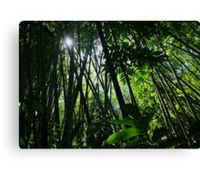 Sun ray shining through the bamboo grove in a tropical jungle Canvas Print