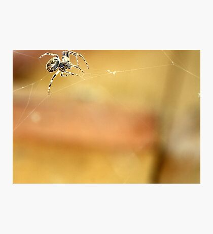 Spider and Web in Montana Photographic Print