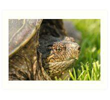 Big Snapping Turtle 2 Art Print