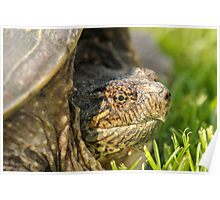 Big Snapping Turtle 2 Poster