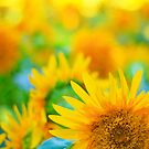 Cheerful Happy Yellow Sunflower Blue Green Summer by Beverly Claire Kaiya