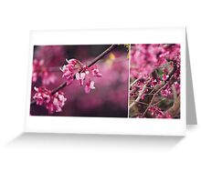 Judas Tree flower study Greeting Card