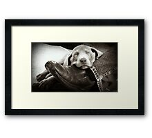 "OUR SILVER LAB ""GRACIE"" Framed Print"